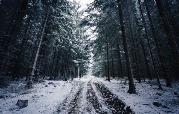 Picture Nature, Winter, Road, Trees, Snow, Forest, Traces, Branches