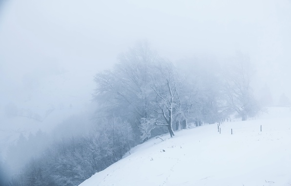 Picture winter, snow, nature, fog