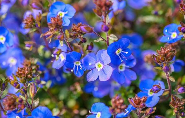 Picture macro, blue, Veronica