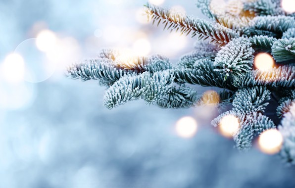 Picture winter, snow, branches, tree, frost, winter, snow, bokeh, fir tree