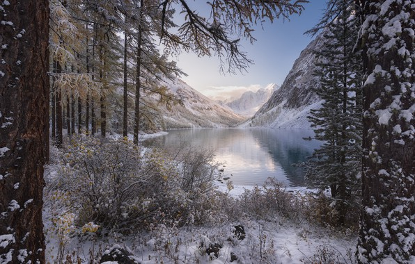 Picture winter, forest, snow, trees, mountains, lake, the bushes