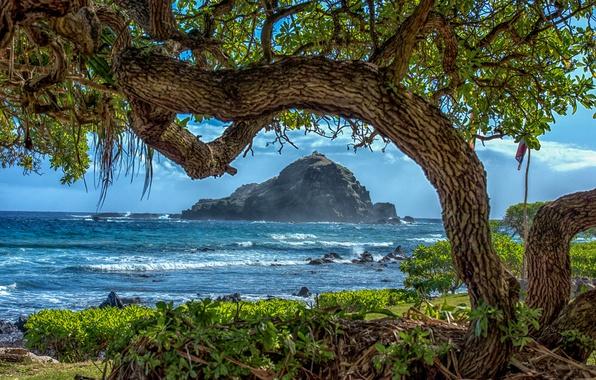 Picture sea, trees, branches, tropics, stones, rocks, coast, Hawaii, surf, USA, Sunny, the bushes, the island …