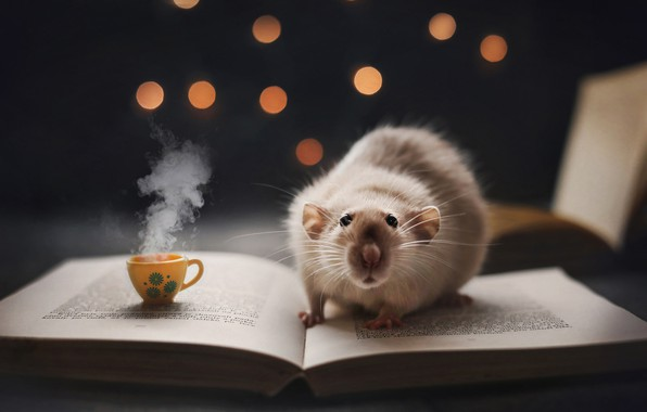 Picture coffee, book, rat, the mug, nighttime reading