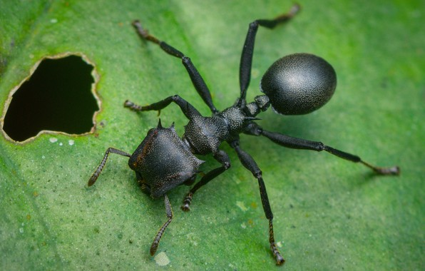 Picture sheet, ant, insect