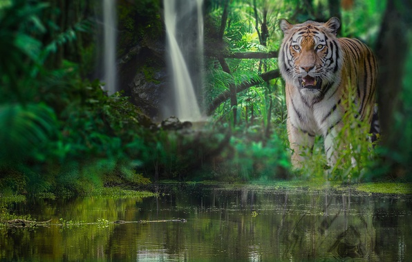 Picture forest, water, tiger, waterfall, jungle, wild cat