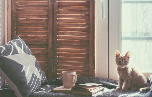 Picture cat, cat, room, bed, window, mug, pillow, book, kitty