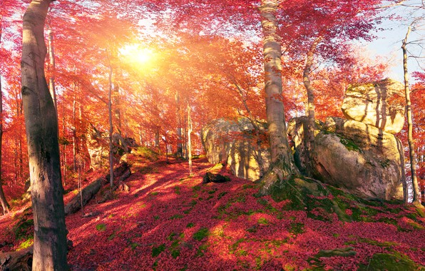 Picture autumn, forest, leaves, the sun, trees, mountains, stones, moss, Ukraine, Transcarpathia