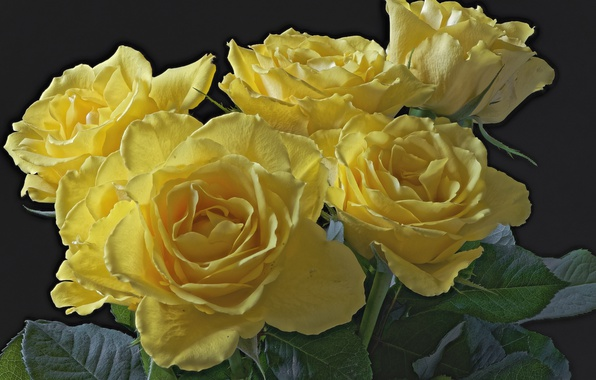 Picture macro, yellow, roses