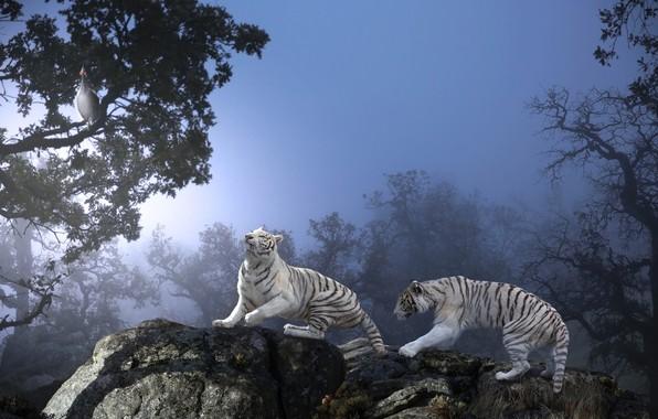 Picture animals, trees, nature, stones, predators, tigers, Thai Phung