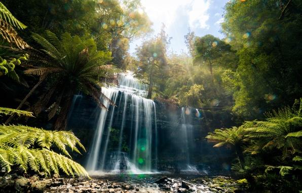 Picture forest, nature, glare, waterfall, jungle, Tasmania