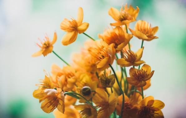 Picture flowers, mood, minimalism, bouquet, minimalism, flowers, mood