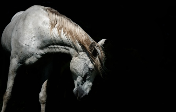 Picture nature, background, horse