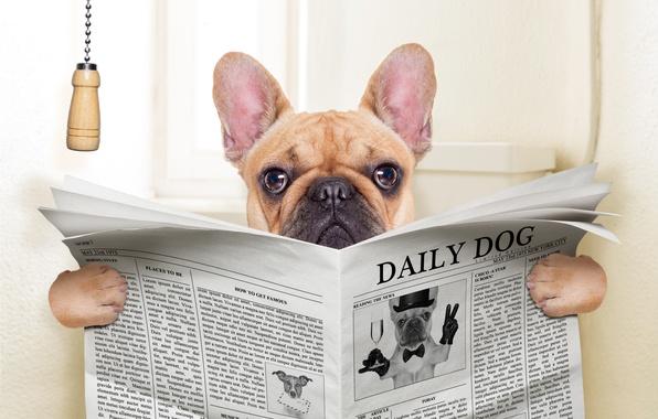 Picture dog, humor, dog, newspaper