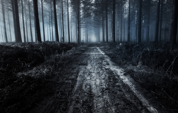 Photo Wallpaper Forest Night Road