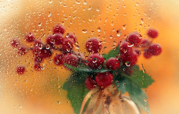 Picture glass, drops, berries