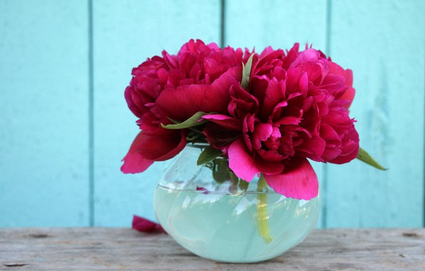 Picture flowers, background, Wallpaper, bouquet, peonies, peony, flowers in a vase, peony, mini bouquet, Burgundy peonies