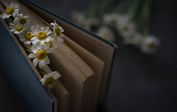 Picture Flowers, Book, Chamomile