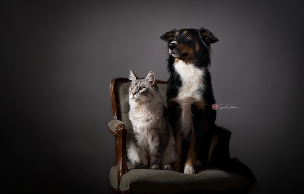 Picture cat, house, dog