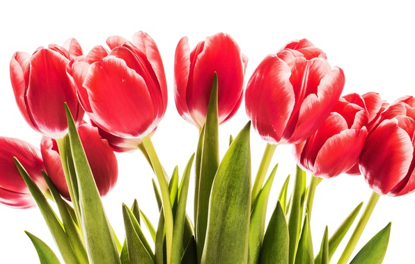 Picture flowers, tulips, red, love, wood, romantic, tulips, spring, red tulips