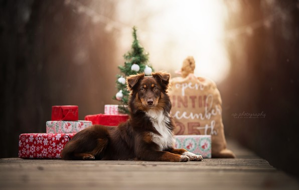 Picture dog, gifts, bag