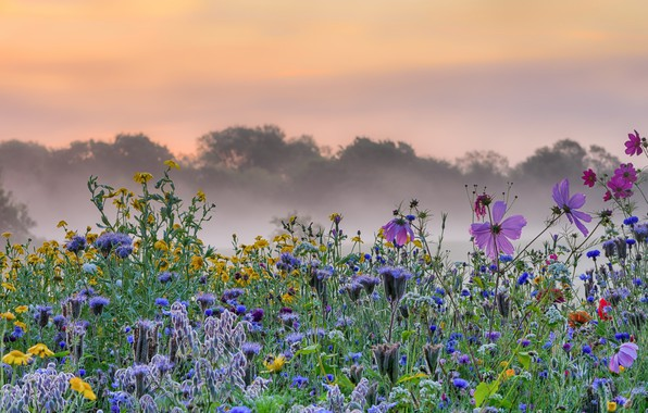 Picture flowers, fog, morning