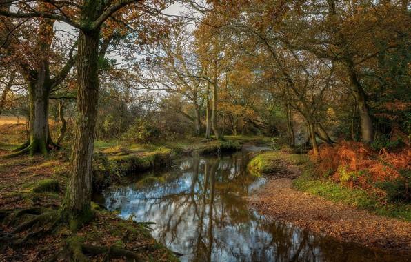 Photo wallpaper nature, trees, autumn, lake