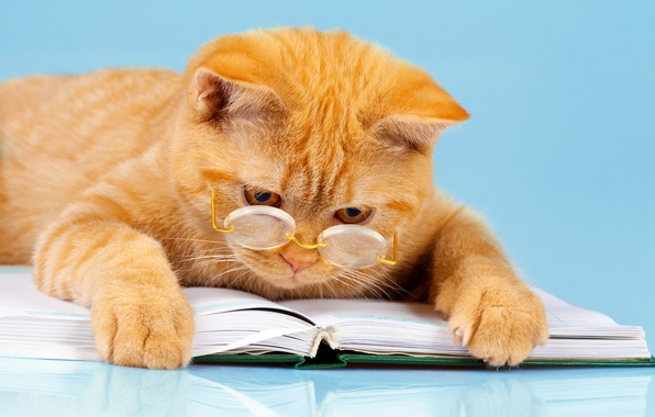 Picture cat, background, humor, paws, red, glasses, lies, book, reads, smart