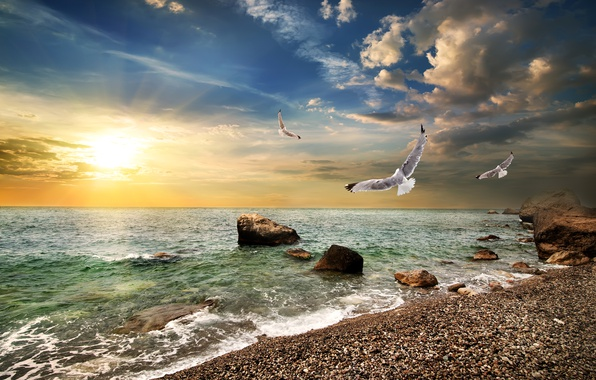 Picture sea, the sky, the sun, clouds, stones, dawn, coast, seagulls, horizon, Crimea