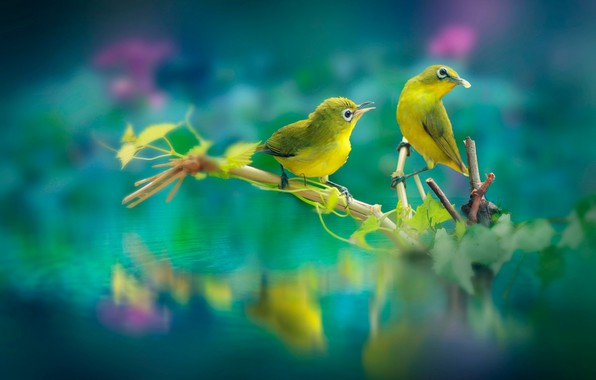 Picture leaves, water, birds, nature, branch, pair, bokeh, the white-eye