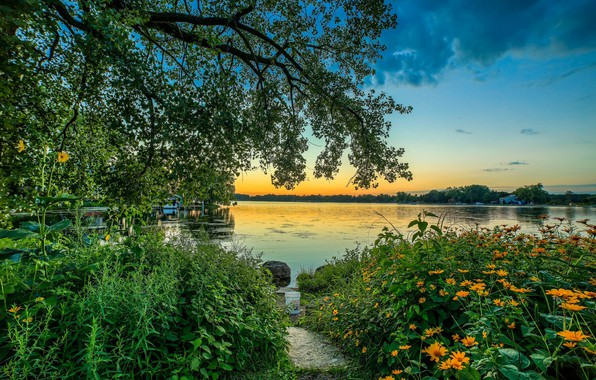 Picture trees, flowers, nature, lake, morning