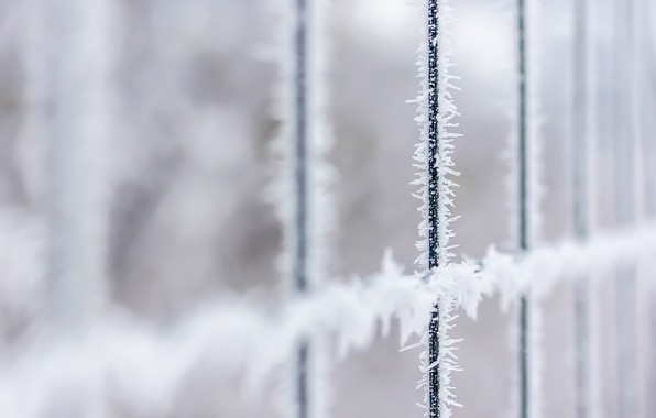 Picture winter, frost, the fence
