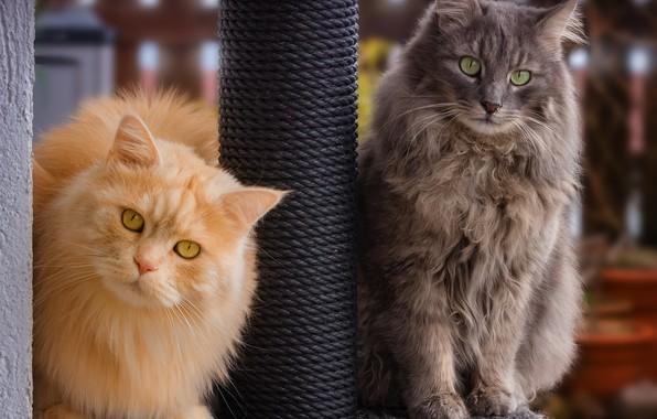 Picture cat, cat, pair, friends