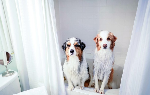 Picture dogs, house, bath