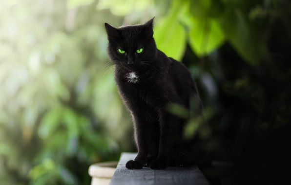 Photo wallpaper bokeh, black cat, green eyes, look, cat