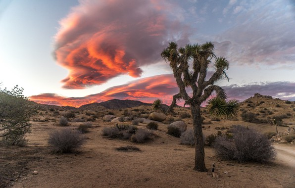 Picture desert, cloud, the bushes