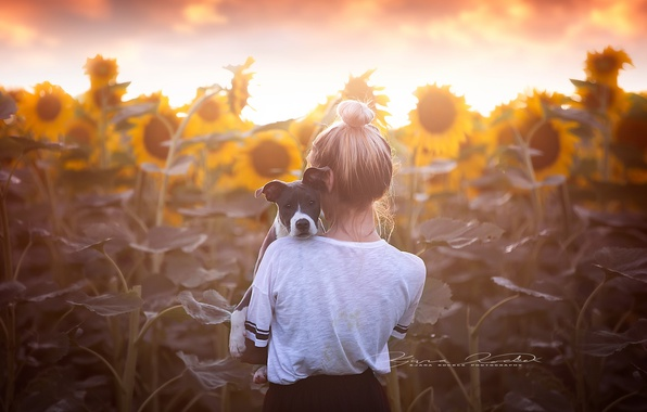 Picture sunflowers, dog, girl