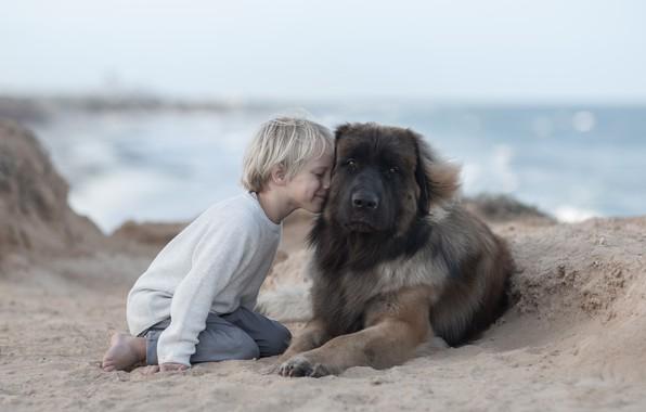 Picture sand, mood, dog, boy, friendship, friends, dog, Leonberger