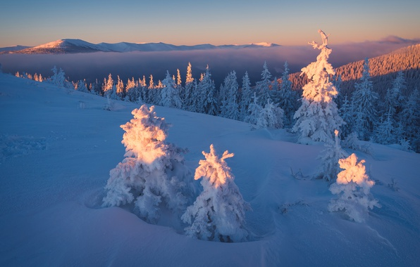 Photo wallpaper winter, forest, the sky, light, snow, landscape, sunset, mountains, hills, beauty, tale, the evening, ate, ...