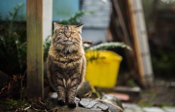 Picture cat, fluffy, walk