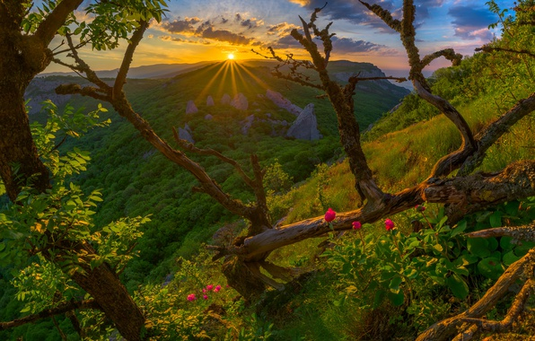 Picture forest, trees, sunset, flowers, mountains, Russia, Crimea, The Crimean mountains
