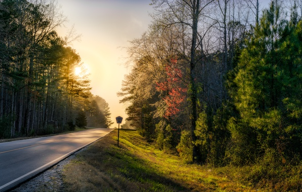 Photo wallpaper road, forest, nature, morning