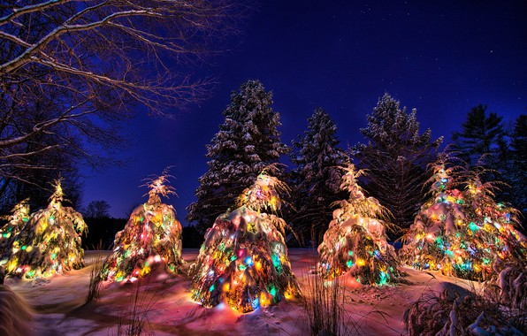Picture winter, the sky, snow, night, tree, New year, garland