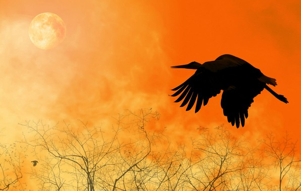 Picture flight, collage, bird, wings, silhouette