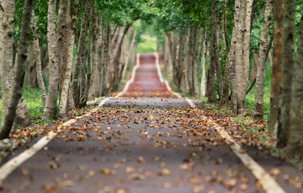 Picture road, autumn, leaves, trees, alley