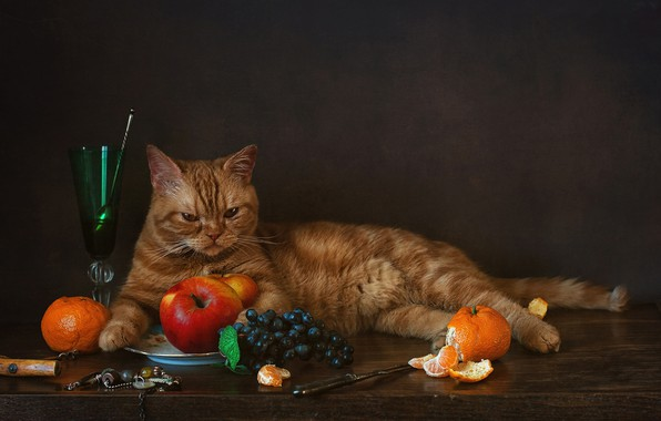 Picture apples, glass, grapes, tangerines, red cat, cat