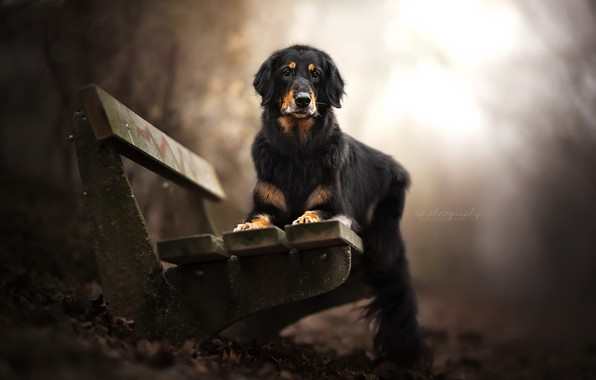 Picture each, dog, bench