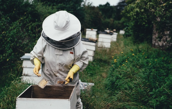 Picture forest, cell, bees, honey, beehive, beekeeper, apiary, hives, chisel, the beekeeper
