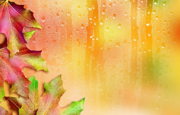 Picture leaves, drops, background, maple
