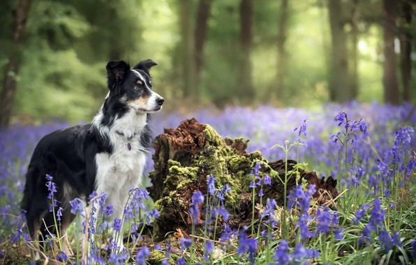 Picture flowers, nature, each, dog