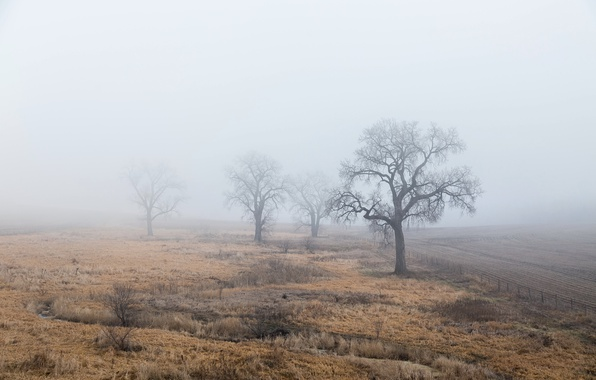 Picture field, trees, fog